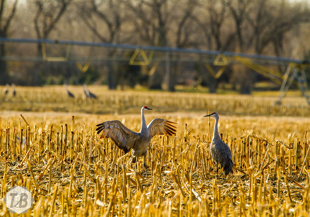 Photographing Wildlife in the Platte River Valley of Nebraska