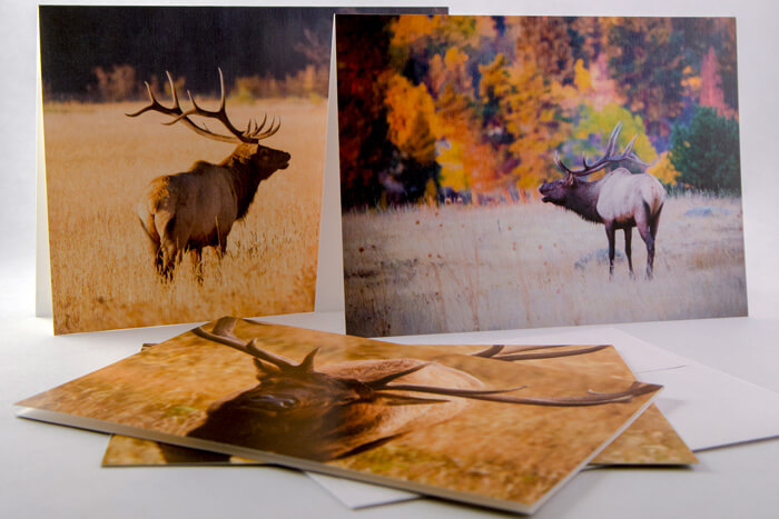 Note cards from the seasons of Medicine Bow Collection.