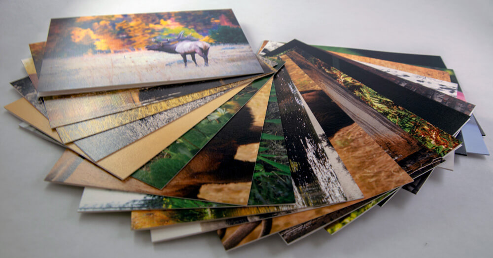 Notecards from the Untamed Gallery.